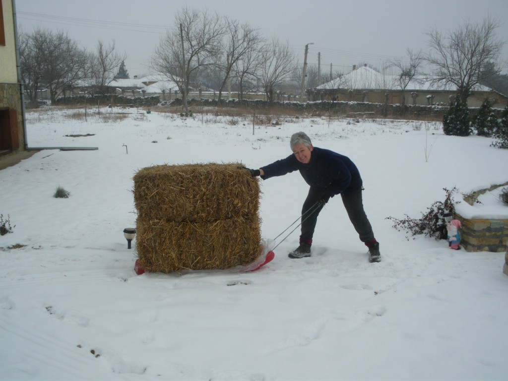 Transporting bales by sledge in snowy Bulgaria